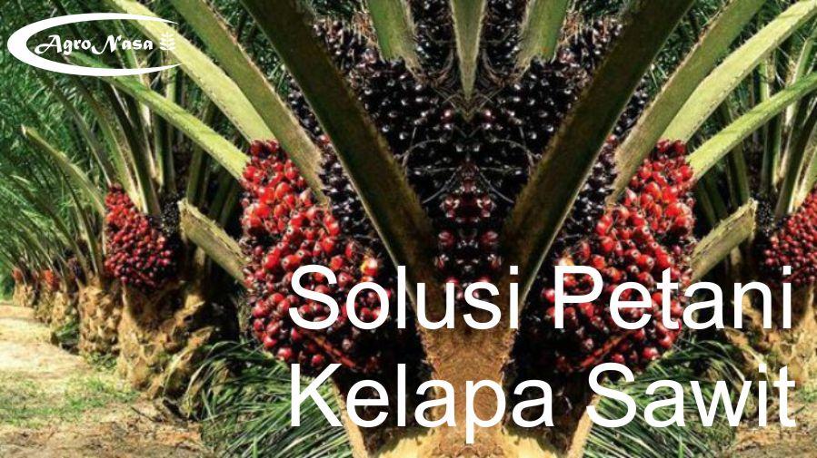 solusi kelapa sawit