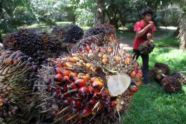 hama pohon kelapa sawit