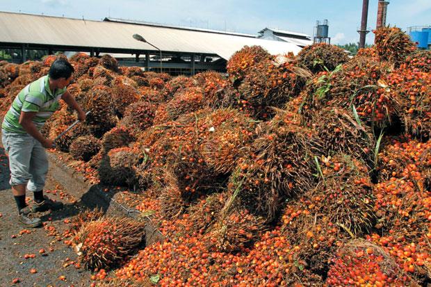komoditi ekspor minyak sawit