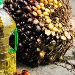 minyak kelapa sawit