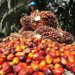 perusahaan kelapa sawit di indonesia