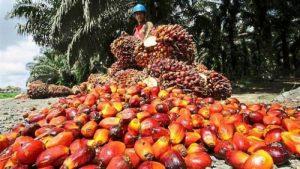 Daftar Nama Perusahaan Sawit di Indonesia