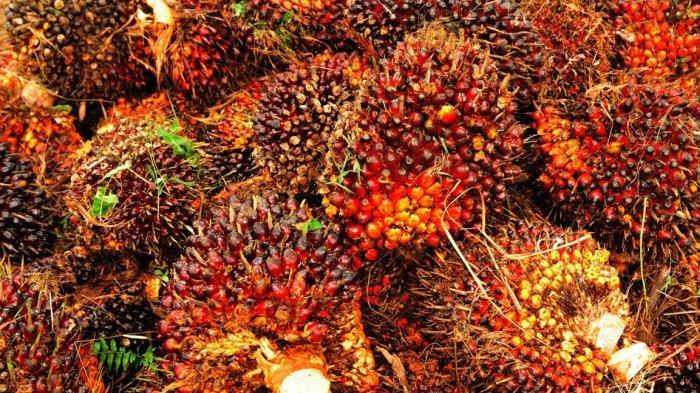 perusahaan kelapa sawit