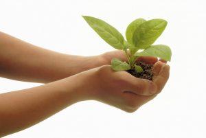 7 Jenis Pupuk Organik untuk Pertumbuhan Tanaman