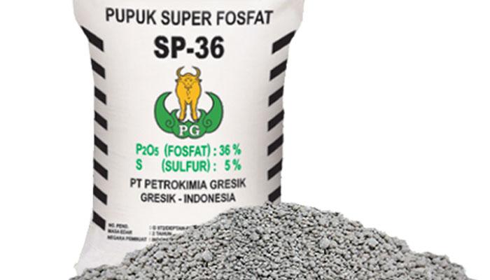 kandungan pupuk sp 36