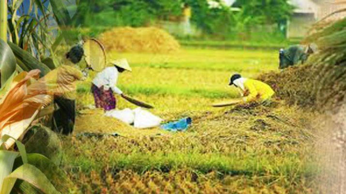 peningkatan ketahanan pangan dengan tidak menggunakan bahan berbahaya