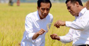 Bagaimana Cara Meningkatkan Ketahanan Pangan di Indonesia?