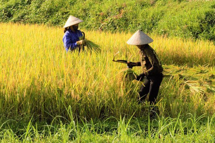 peningkatan ketahanan pangan melalui dukungan kepada petani