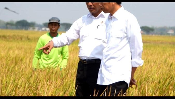 peningkatan ketahanan pangan melalui sumberdaya hewani dan nabati