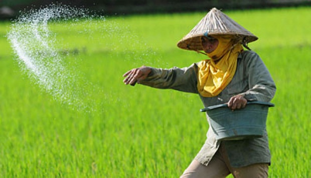 cara pemupukan padi yang benar