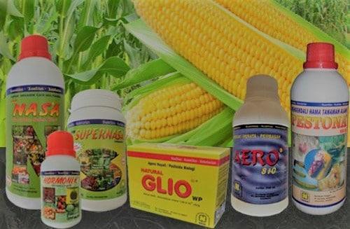 pemupukan jagung dengan pupuk nasa