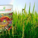 pupuk nasa untuk padi dari bahan organik