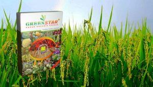 Greenstar Pupuk NASA untuk Padi yang Berkualitas