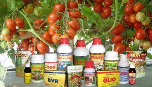 Jenis dan Manfaat Pemberian Pupuk untuk Tomat
