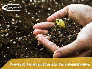 Cara Menyuburkan Tanah dengan Mudah dan Cepat