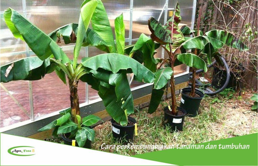 Cara perkembangbiakan tanaman dan tumbuhan dengan mudah