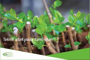 Cara Stek Tanaman dan Tumbuhan Menggunakan Daun, Batang juga Akar