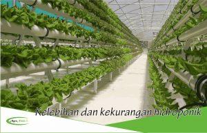 Keunggulan dan Kekurangan Metode Bertanam Secara Hidroponik yang Wajib Anda Ketahui