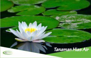 7 Contoh Tanaman Hias yang Hidup di Air dan Permukaannya