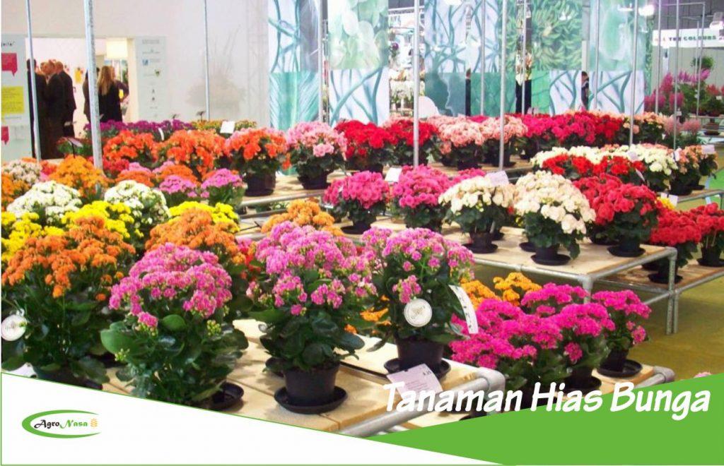 Tanaman Hias Bunga Dan Keanekaragamannya Yang Indah