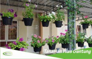 5 Contoh Tanaman Hias yang Digantung pada Dinding Halaman dan Rumah!