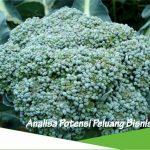 Peluang usaha budidaya brokoli