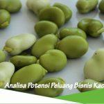 Peluang usaha budidaya kacang hijau