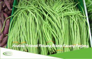 Analisa Potensi Peluang Bisnis dan Investasi Tanaman Kacang Panjang
