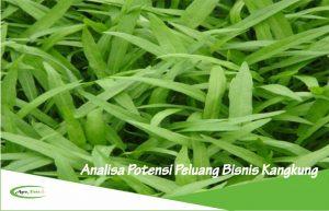 Analisa Potensi Peluang Bisnis dan Investasi Tanaman Kangkung