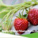Peluang usaha budidaya strawberry