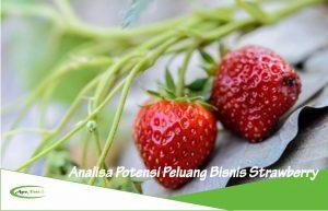 Analisa Potensi Peluang Bisnis dan Investasi Tanaman Strawberry