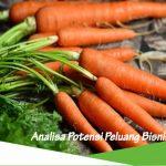 Peluang usaha budidaya wortel