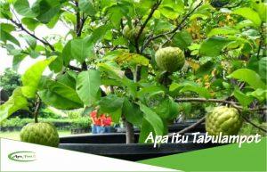 Pengertian dan Definisi Lengkap Tentang Tambulapot serta Contohnya