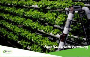Definisi dan Pengertian Pertanian Urban Serta Keunggulan dan Kekurangannya