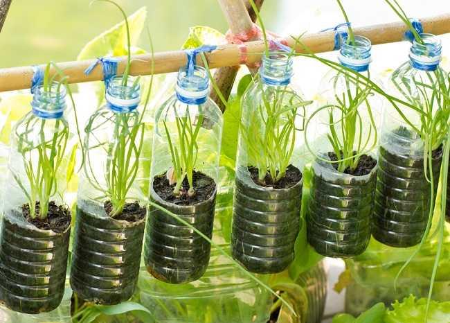 Apa itu urban farming