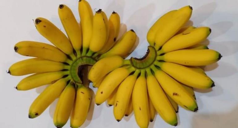 Jenis buah dan pohon pisang mas