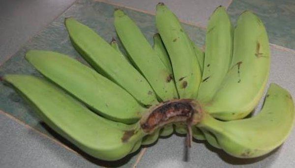 jenis pisang nangka