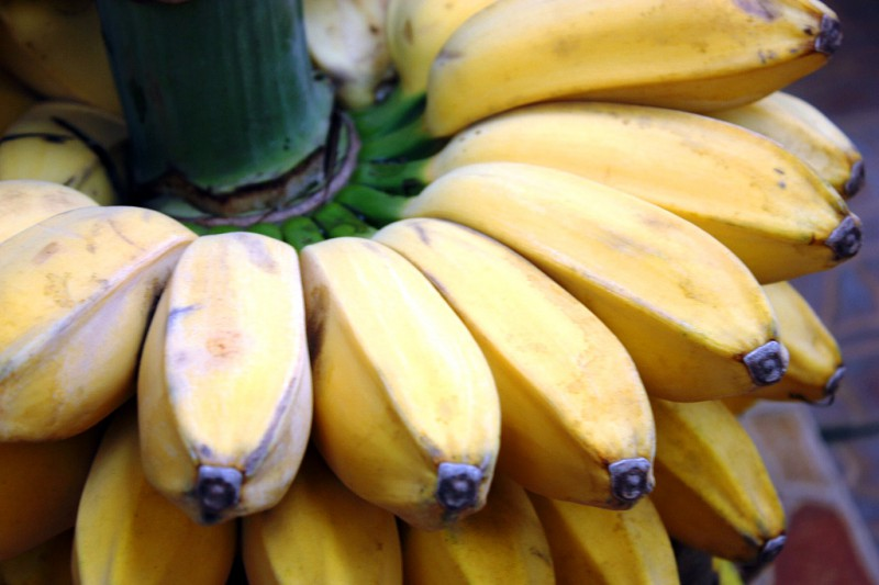 Jenis buah dan pohon pisang uli