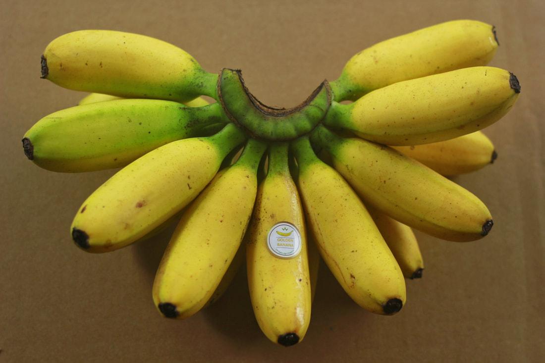 pisang mas kiranan dan manfaatnya