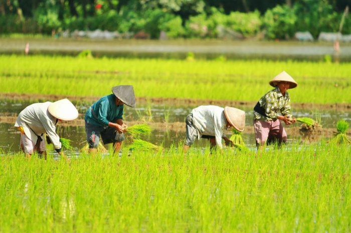 Manfaat Investasi Sektor Pertanian