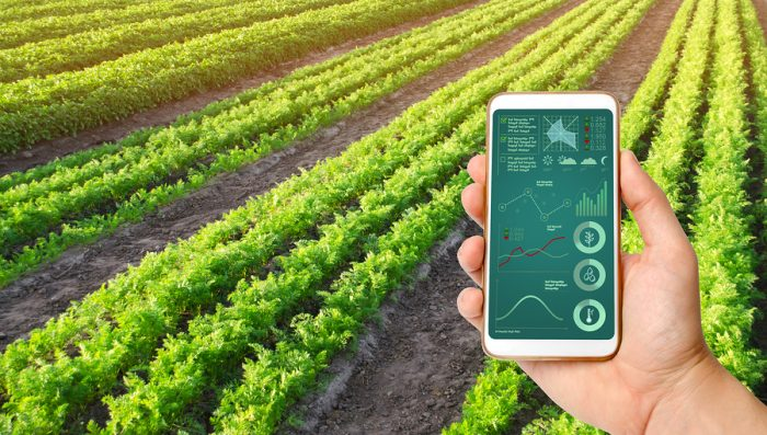 tips melakukan investasi pertanian